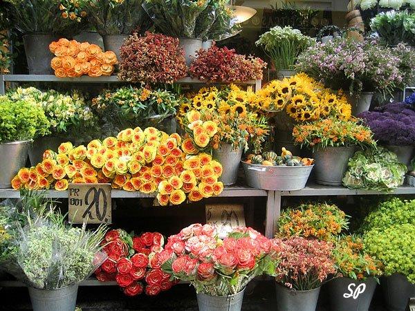 разнообразие цветов в цветочном магазине