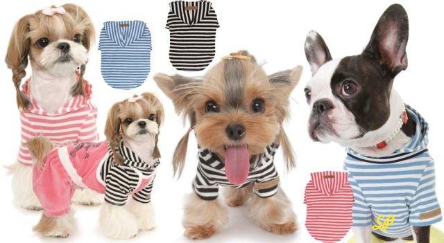 маленькие собаки в полосатой одежде