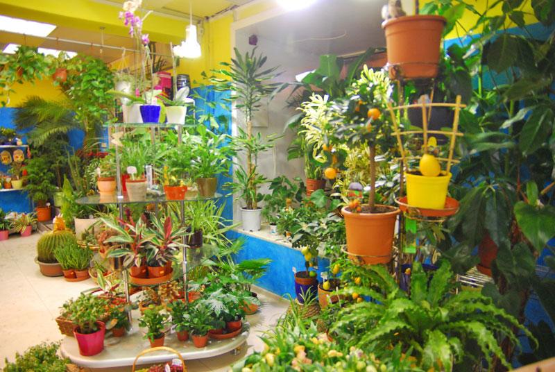 Магазин комнатных цветов