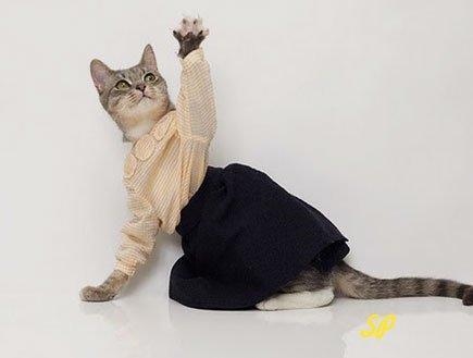 одежда для животных, кошка в блузке и юбке