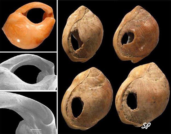 Морские ракушки различного типа и цвета на черном фоне, которые в древности использовались вместо денег