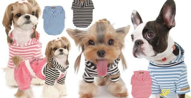 Выгодно ли продавать одежду для собак с Китая